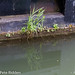 High water plants