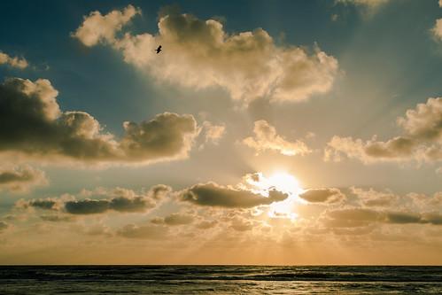 palmcoast florida unitedstates us landscape light beach sand sea seaside seashore marineland coast salt life canon 5dmarkiv swarnendu sen photography tour travel nature cloud cloudburst shadow flight places