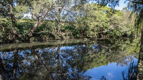 Reflected Riverbank