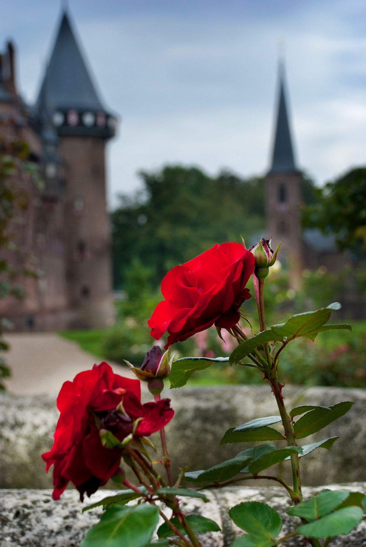 Rose garden at Castle de Haar. Credit Ewald Zomer