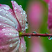 mktphotoflickr-2.jpg by roswellsgirl