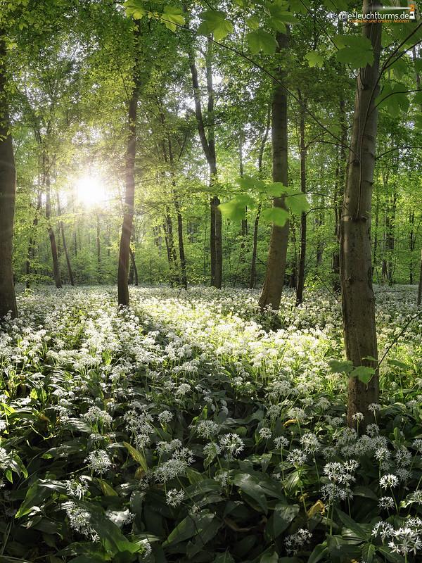 Meadows of buckrams