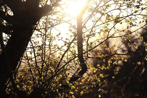 A wonderful feeling in the warm spring sun