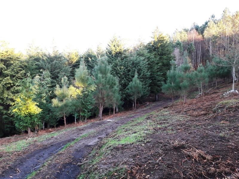 limpezas_florestas (3)