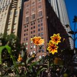 WTC flowers 2016