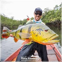 E você, já está preparado para a temporada 2017?! O tucunare açú só se encontra em uma região da Amazônia e Barcelos está nesse local privilegiado. Conheça a Amazônia, conheça Barcelos e fisque o seu tucuna.  #pescaamadora #pescaesportiva #pesqueesolte #t