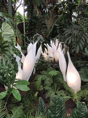 White Belugas