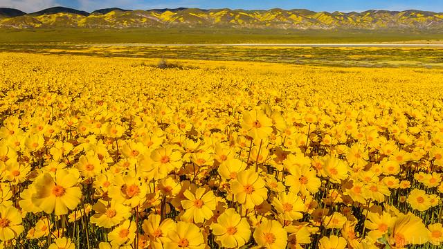 Carrizo Plain National Monument, Nikon D3, AF-S Zoom-Nikkor 24-85mm f/3.5-4.5G IF-ED