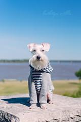 Old Man River Dog