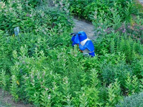 pgparks butterflygarden lumix maryland milkweed panasonic park patuxent patuxentriverpark photolemur princegeorgescounty princegeorgescountydepartmentofparksandrecreation tz90 zs70
