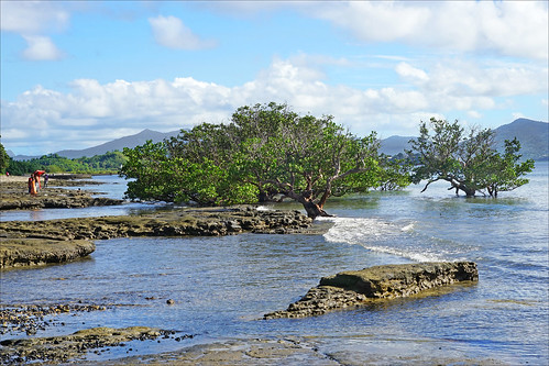 dalbera mayotte badamiers mangrove littoral france petiteterre