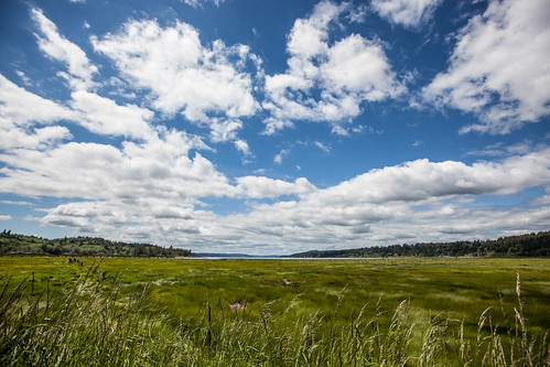 belfair maryethelerwetlandsnaturepreserve washington clouds grass saltmarsh sky unitedstates