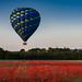 Balloon over poppy field