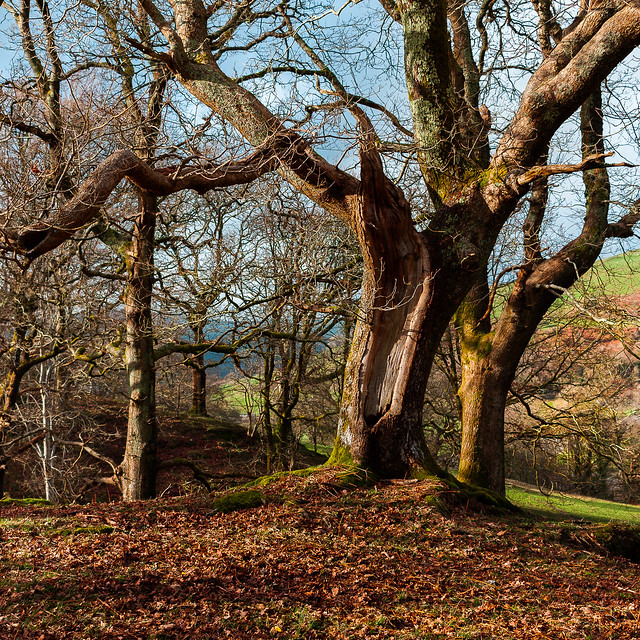 Coed y Garth, Canon EOS 40D, Canon EF-S 24mm f/2.8 STM