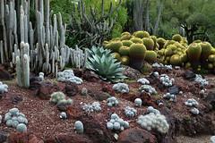 Alien landscape, Desert Garden