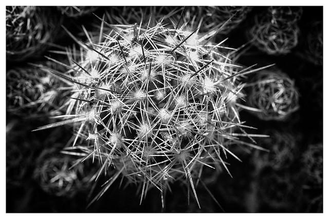 mono cactus, Canon EOS 70D, Sigma 105mm f/2.8 EX DG OS HSM Macro