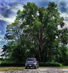 MY LITTLE CAR AND A BIG TREE