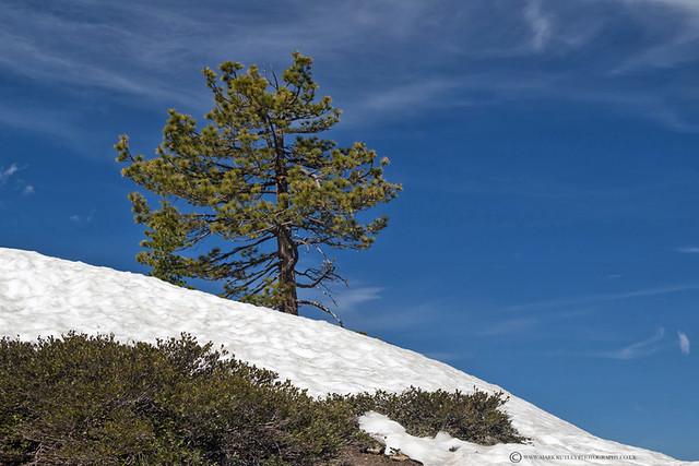 LONE TREE - SENTINEL DOME