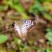 butterfly 6 por ikarusmedia