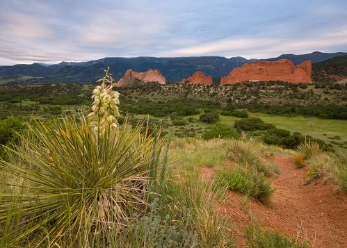 gardenofthegods colorado coloradosprings co yucca plant landscape rocks sky nosun explore explored