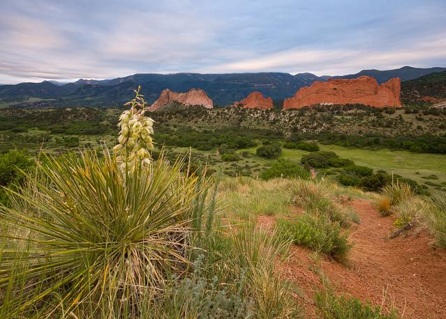 Flowering Yucca - Garden, Nikon D600, Sigma 12-24mm F4.5-5.6 II DG HSM