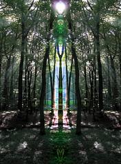 Wald ~ Kathedrale