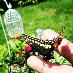 Saved this sucka from getting clipped while doing the #hedges! Doing my part to preserve some #Beauty in the world! #hapless #butterfly