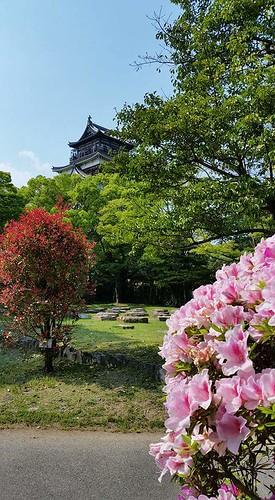 hiroshima castle japan spring flowers