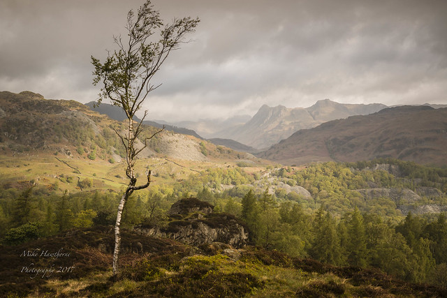 Trees on Holme Fell, Canon EOS 70D, Canon EF-S 17-55mm f/2.8 IS USM