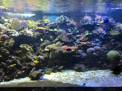 Indo-Pacific Reef