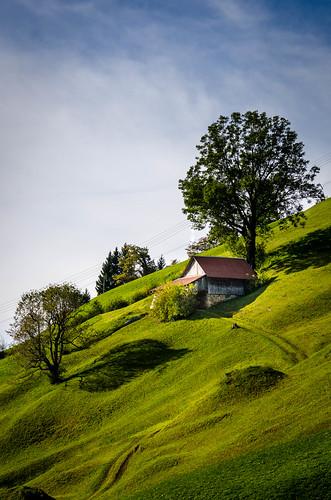 switzerland hinterbergen meadow barn tree vitznau cantonlucerne luzern schweiz che