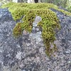Moss on a granite surface #cathedralrocknationalpark