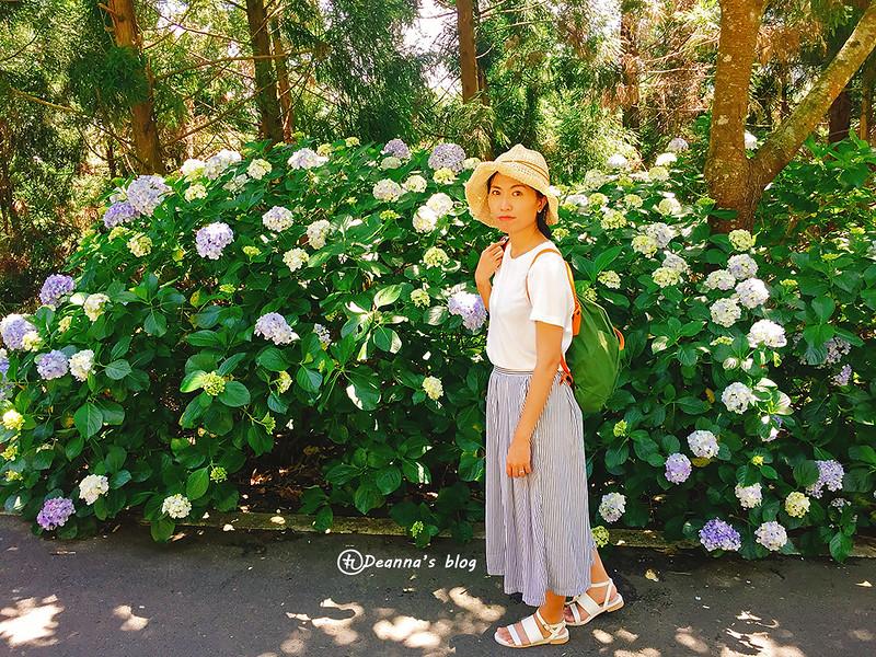 高山青 繡球花