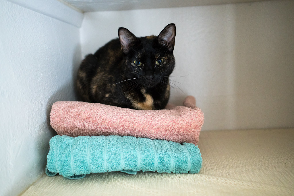 Our tortoiseshell cat Trixie sleeps on towels in the linen closet