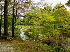 Granger Pond - Veterans Park