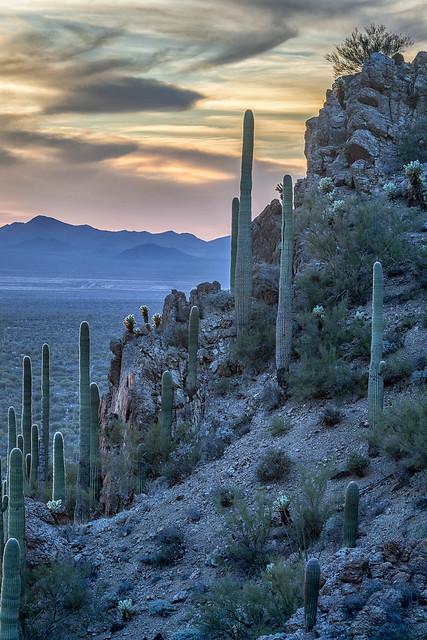 Saguaro Blue