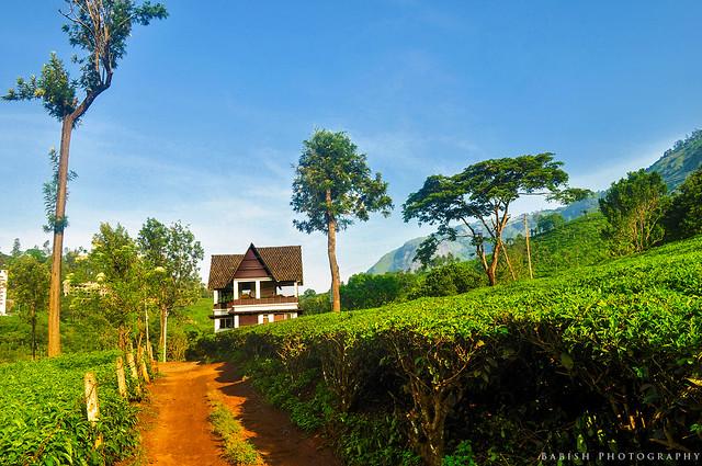 Gruenberg Tea Plantation Haus, Munnar, Kerala