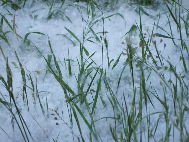 'Sommer-Schnee' - Pappel-Samen 2705201703, Fujifilm FinePix A700