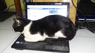 Miao Online