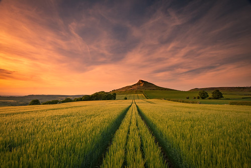 barley sunset roseberrytopping littleroseberry northyorkshire northeastengland landscape landscapes england nature art field nationaltrust nationalpark northyorkshiremoorsnationalpark northyorkshiremoors