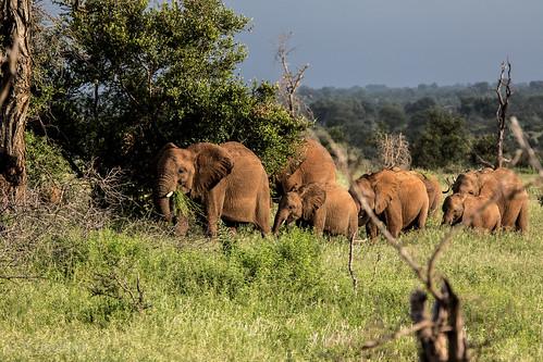 afrika sydafrika krugerpark mpumalanga za elephants