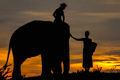 Love me love my elephant .