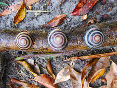 Snails and Tree Roots by shaire productions
