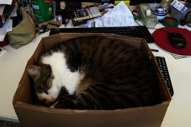 Sleeping into a box on dad's desk