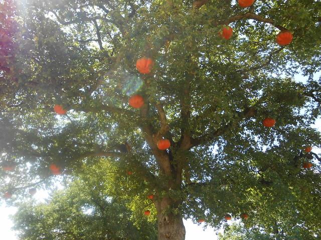 arbre a citrouille jardin, Nikon COOLPIX S3300