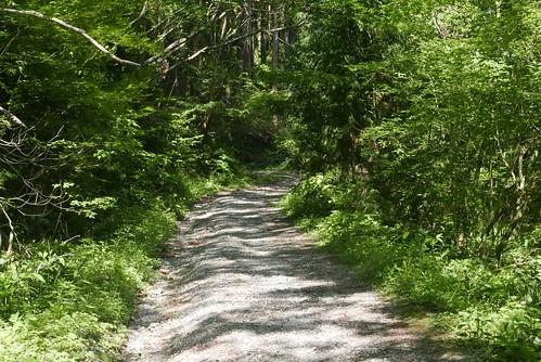 「渓流 釣り 林道」の画像検索結果