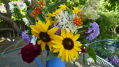 Summer cut flowers