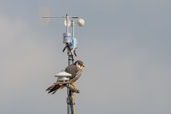 Weather Station Hobby