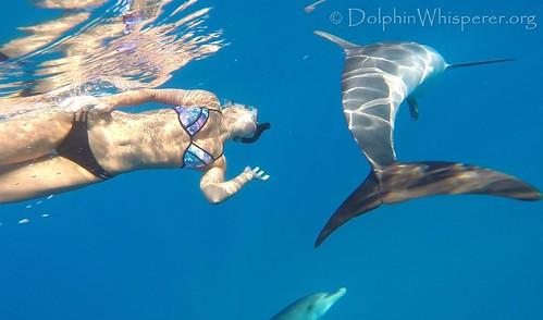 Dolphin Whisperer Bimini Dolphins 5.7 (28c)