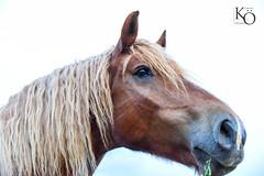 Pferd   #fotografie #photography #wildlife #foto #portrait #landscape #bilder #horse #pferd #natur #oehler_photography #germany #alpen #feld #frühling #nature #raps #wasser #landschaft #picture #travel #world #tiere #biene #blume #sonnenuntergang #landsch